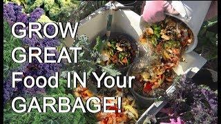 Recycle Compost Scraps in Your Vegetable Garden Plants, No Turn No Work