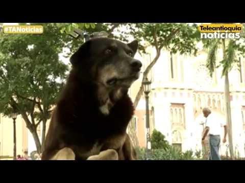 Habitantes de Bello denuncian presunto abandono de los animales callejeros
