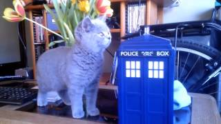 Ursus the British Shorthair is introduced to the TARDIS