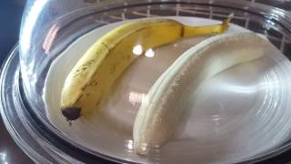 Banana in a vacuum chamber
