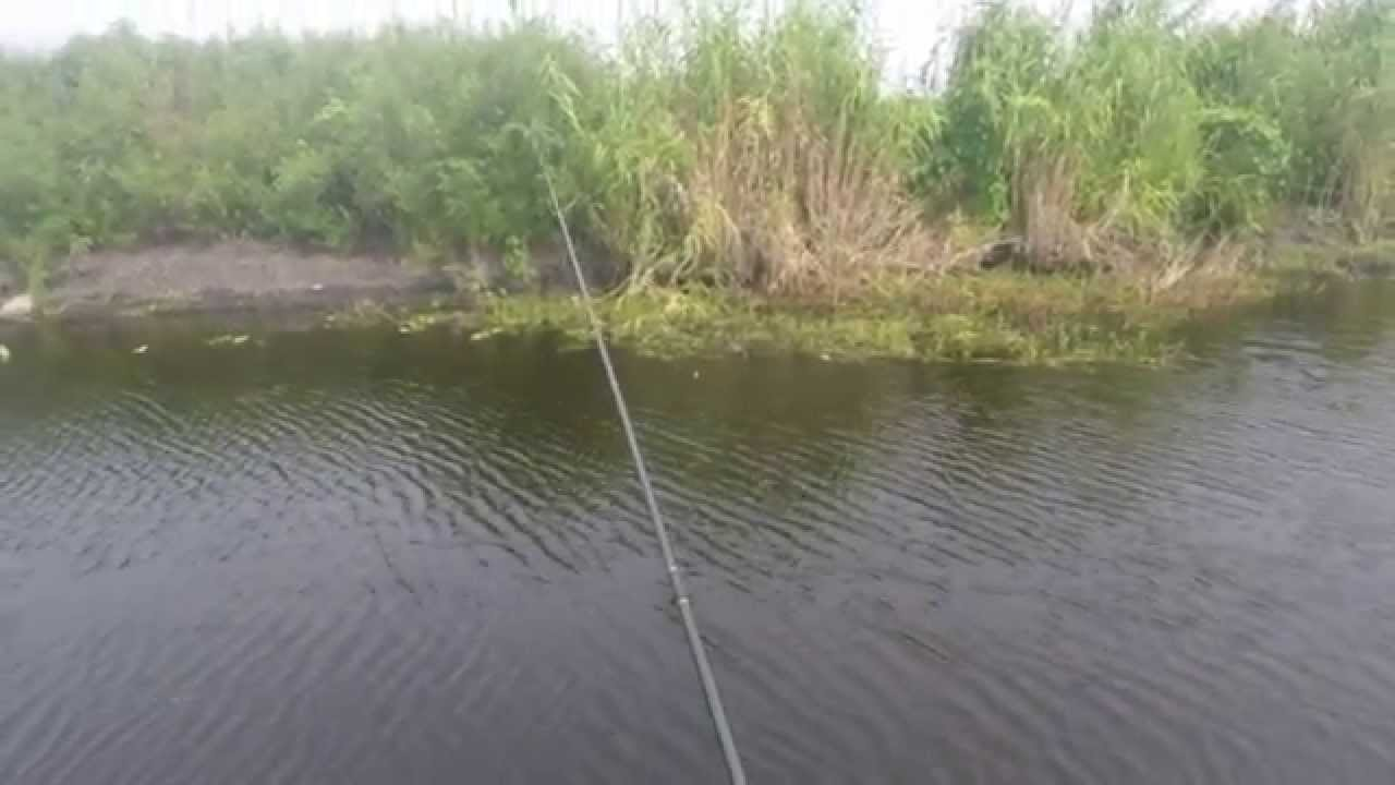River Bluegill Fishing Bluegill Fishing on The st