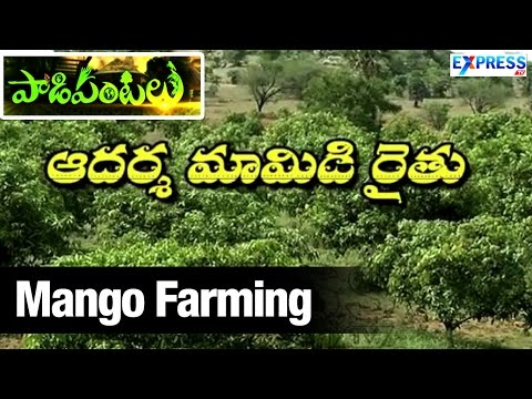 Success Story of Mango Farming | ExpressTV