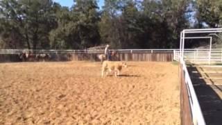 Sweeney- Jared Lesh cowhorses