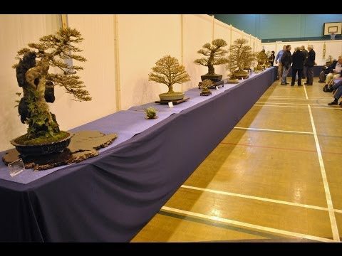 UK bonsai shows 2013 part 1