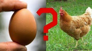 25 Datos Inútiles #9 | ¿Que fue primero, el huevo o la gallina?