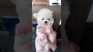 TRY NOT TO LAUGH ,Cute DOG Videos , Funny Videos 0216 1 13