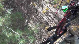 black widow deer lure promo