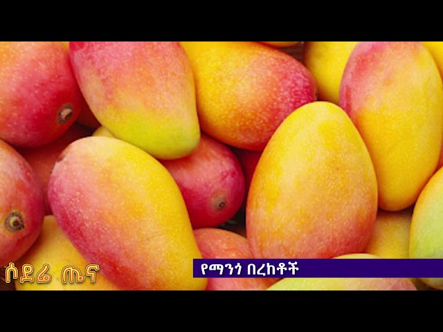 Sodere Health - Mango health benefits
