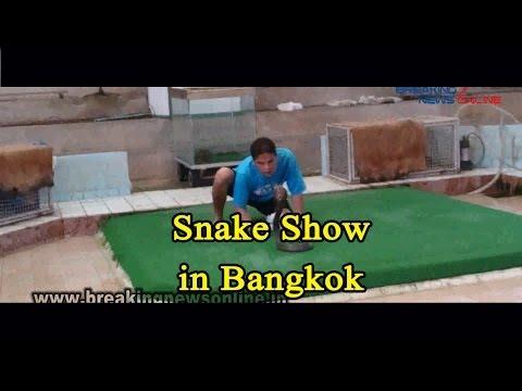 Snake Show in Bangkok
