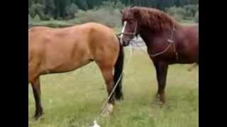 Horse Sex Porn