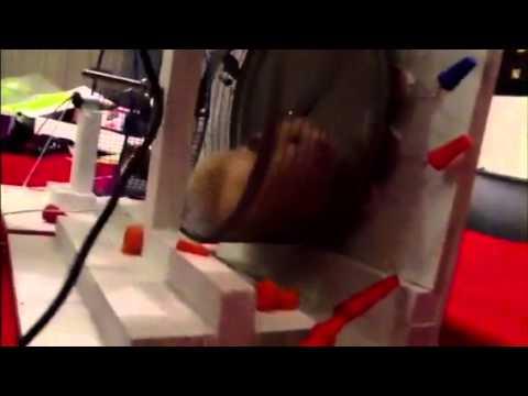 Hamster Wheel Power Hamster Power