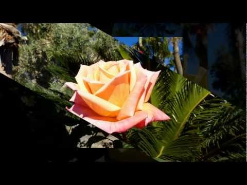 The Roses of Valle del Oro RV Resort Mesa Arizona