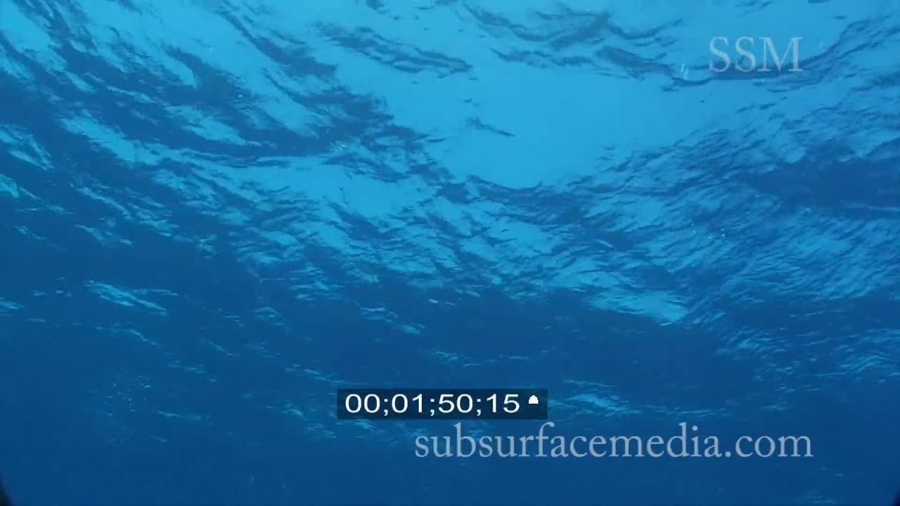 Water Surface From Below Water Surface From Below