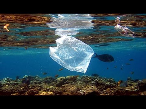 Oceans Will Have More Plastic Than Fish In Them