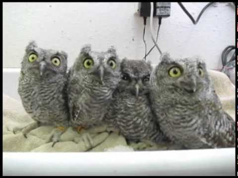 Bunch of blinking owls