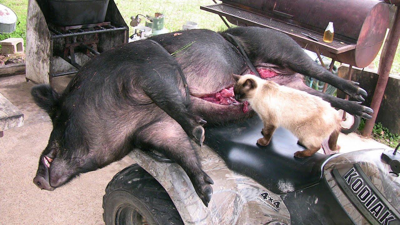 R Hogs Big Boar Headshot! - W...