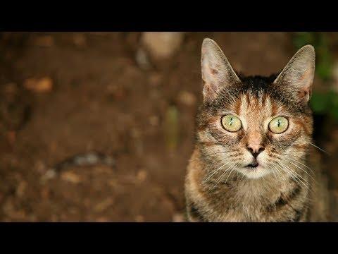 Gnadenhof Melle: Wo todgeweihte Tiere weiterleben dürfen