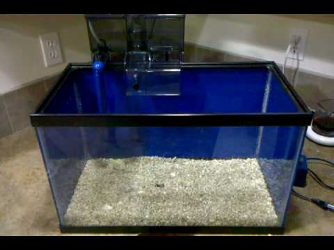 10 gallon nano lagoon: video 1