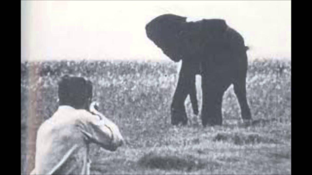 Essay shooting an elephant