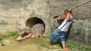 Wow! Brave Boy Catch Big Crocodile in Sewer - How To Catch Big Crocodile
