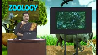 H.S.C. Biology 2nd Paper Chapter 9 CTV Digital Content (Cambrian School and College)