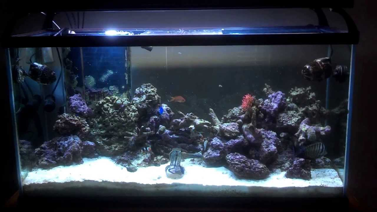Saltwater fish tank 90 gallon my 90 gallon reef tank for Fish tank service