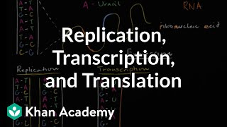 DNA replication and RNA transcription and translation | Khan Academy