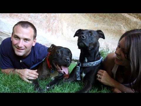 Vicktory Dogs reunite at Best Friends Animal Sanctuary