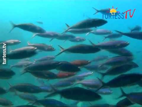 Сауна Подводная лодка Основной - Интим досуг, секс услуги 02:15.