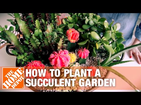 How To Plant A Succulent Container Garden
