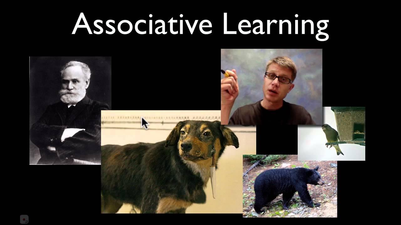 Behavior Animals Animal Behavior