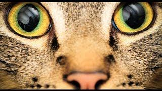 Աշխարհը կենդանիների աչքերով