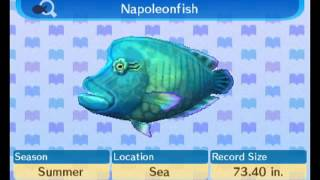 Play fish guide animal crossing new leaf for Acnl fish guide