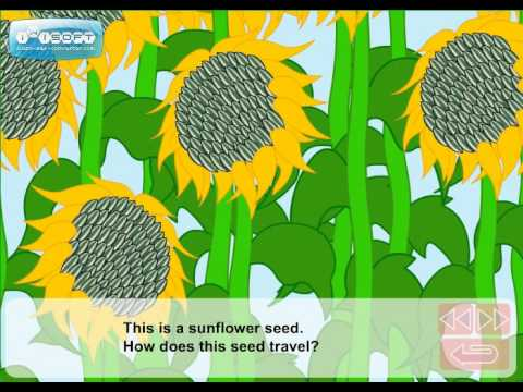 Seeds Travel by Water How do Seeds Travel Video
