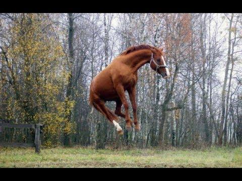 Эти чудные лошади. Шалости, приколы, игры лошадей