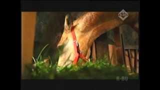 Kuda Jadi Hewan Peliharaan