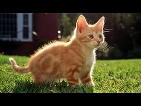 Смешные кошки     смех да и только!