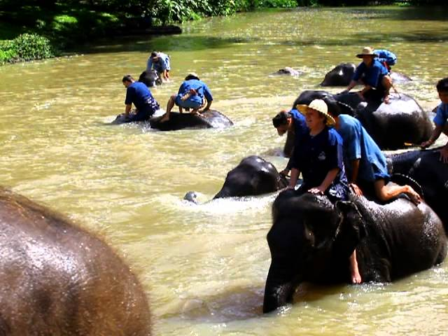 Elephants enjoy rocking in the water...