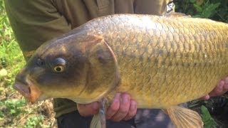 Summer Surface Fishing For Carp - Part Two