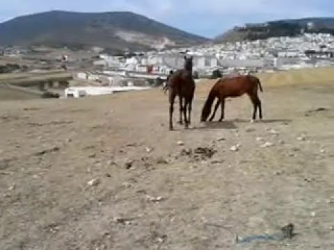 caballo chileno estepa.mp4