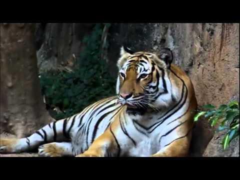 Malacca Zoo Visit