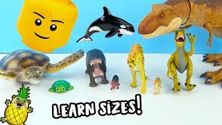 Learn Sizes with Animals and Fun Toys! Educational Shows for Kids by Puggy Pineapple