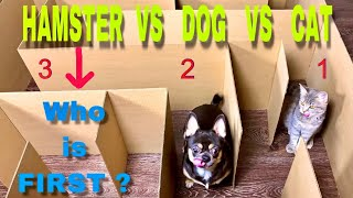 Giant Maze Labyrinth. Cat vs Dog vs Hamster. Who is the Best?