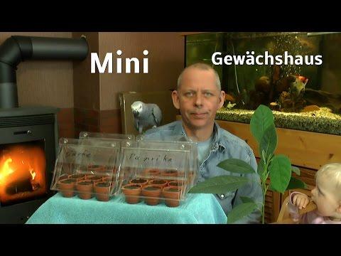 Mini Gewächshaus Anzucht Von Gemüsepflanzen