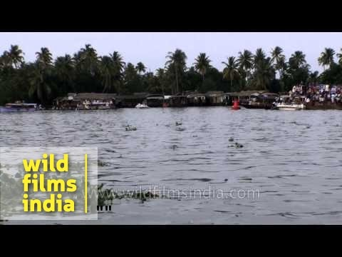 Punnamada lake, the venue of the fabled Nehru Trophy boat race