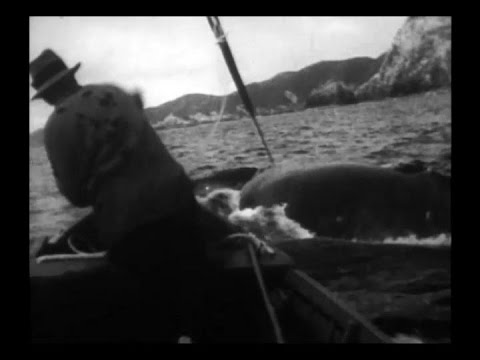 Old Whaling Film 1933. Whangamumu, New Zealand