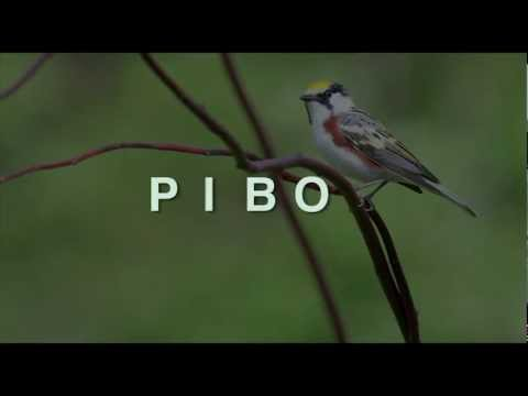 Pelee Island Bird Observatory - Part 3 - It's All About The Birds