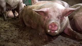 DOMINION 2018 - Full Documentary narrated by Joaquin Phoenix
