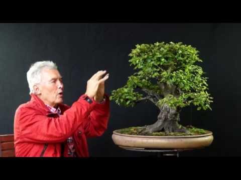 INTERNATIONAL BONSAI ACADEMY with Walter Pall 2013 - Case Study 1/