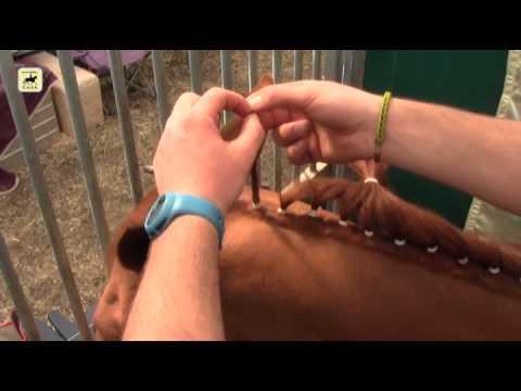 Cómo trenzar a un caballo de doma clásica con moñitos.